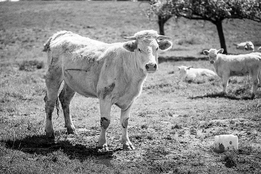 Animaux de la ferme / Chevaux - Page 31 HP5-0003019
