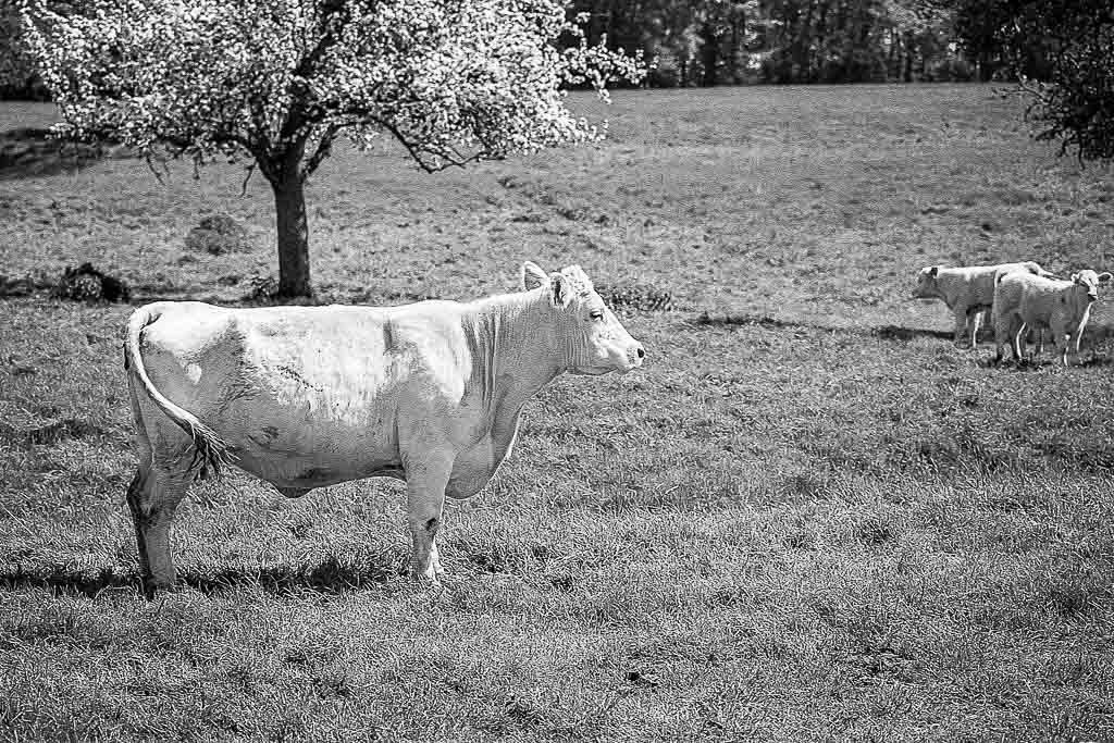 Animaux de la ferme / Chevaux - Page 31 HP5-0003021