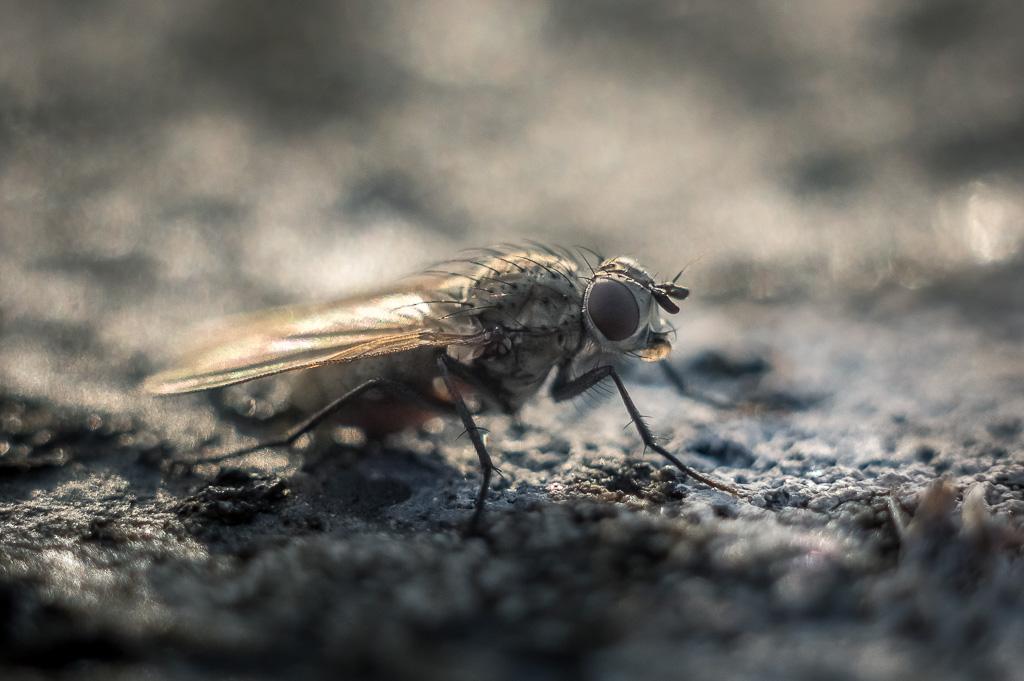 Macros/  proxi/  insectes  - Page 2 20190610-_K3L4353